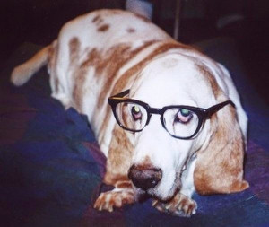 ... Wearing Glasses,Animals Wearing Glasses,funny animals,funny dog,funny