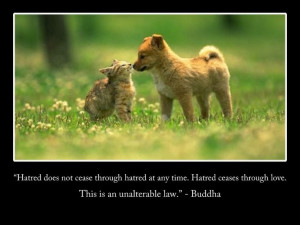 """... ceases through love. This is an unalterable law."""" - #Buddha #quote"""