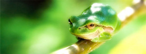 Happy-Frog-Facebook-Cover-Photo