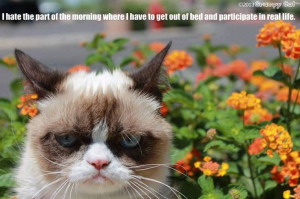 Grumpy cat mornings, grumpy morning, grumpy quotes, morning quotes ...