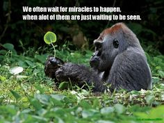 We often wait for miracles to happen, when alot of them are just ...