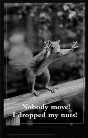 Nobody Move! - Funny pictures