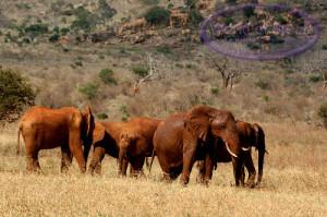 Savanna Elephants Wallpaper