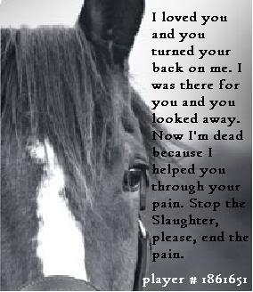 horse abuse Image