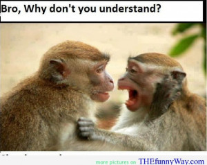 funny monkey, monkey are smart, monkey quote, smart quote