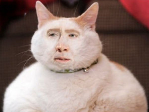 Nicolas Cage as a fat cat