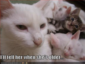 funny animal pictures with words,