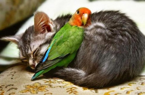 Obviously Photoshopped, cats and birds cannot get along.