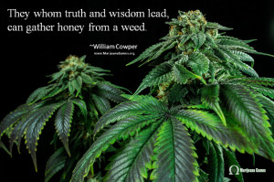 Marijuana Quote Image - Wisdom by Cowper 600x400