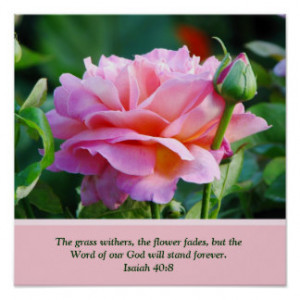 Rose With Bible Verse Posters & Prints