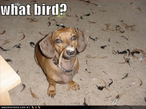 funny dog. Category Funny dog pictures