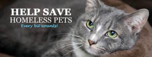 Save-Homeless-Animals4