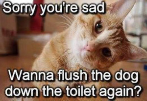 Sorry You're Sad Wanna Flush The Dog Down The Toilet Again Sad Quote