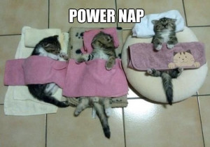 Power Cat Nap