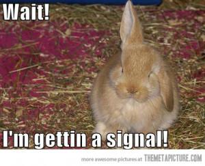 Funny photos funny bunny ears cute