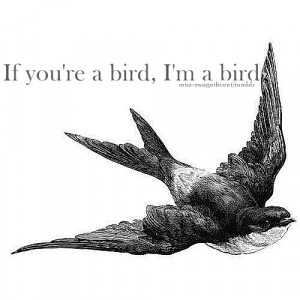 bird, love, notebook, quotes, text, the notebook, typo, typography