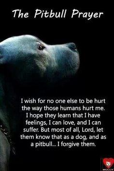 Animal, Pets Sadness, Pitbull Prayer Quotes, Animal Quotes, Pitbull ...