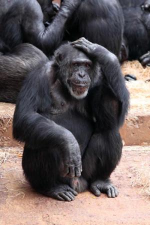 Mystery Ape Stories
