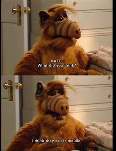 Alf! I loved this show as a child! HAPPY ALF CU!