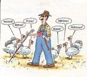 Blind Turkey Farmer ***