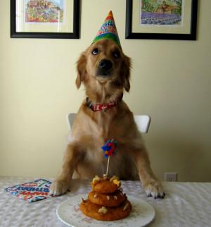 dog birthday dog birthday colorful dog birthday birthday of dog dog ...