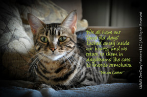 Mean Cat Quotes The premise of this quote