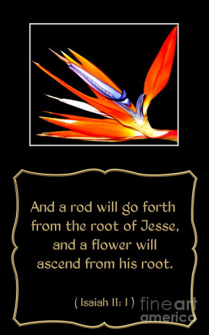 Bird Of Paradise Flower With Bible Quote From Isaiah Photograph