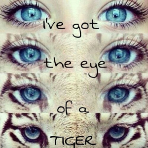 ve got the eye of the tiger