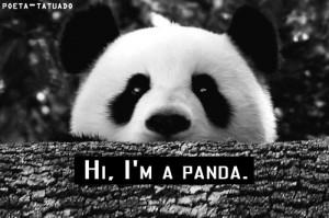 Cute Panda Quotes Include: panda, cute,