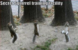 Funny Squirrels on secret training