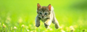 Running Kitty Cute Facebook Covers Ultimate Collection Of Top 50 Best ...