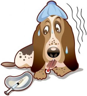 Animals Dogs Stray Sick Dog