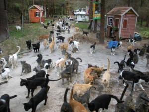 Caboodle Ranch, A 100 Acre Cat Sanctuary
