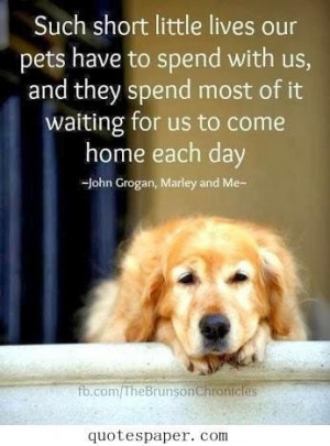 love the pets quotes about life