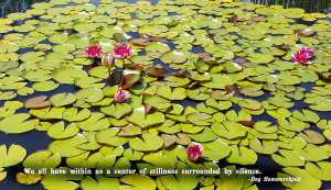 Artists > Scarebaby Design > Images > Water Lilies With Serenity Quote