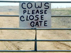Just a reminder for our four legged friends to close the gate behind ...