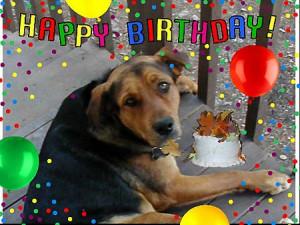 funny dog birthday