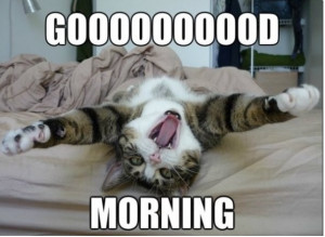 good_morning_quotes_with_cat_images-8.jpg