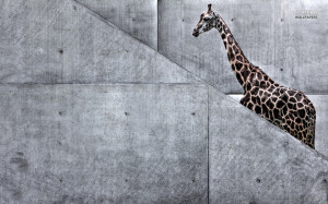 Giraffe Hd Wallpapers Free Nice Wallpaper Picture