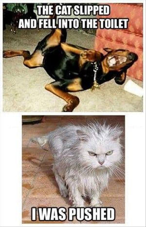 funny funny pics funny pictures humor images pictures sunday funny ...