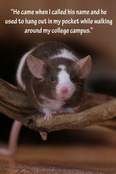 Pet Rat Quotes