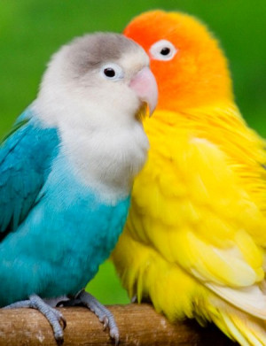 birds, colorful, cute