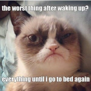 Today's quote of the day by Grumpy Cat - Grumpy Cat Picture