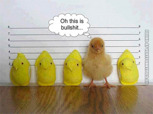 Funny Pictures | demotivational animals | Chicken lineup