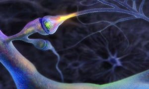 neurons functions biology of neuronal human synapses has in mj ...