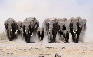 fond ecran hd animal elephant horde marche poussière wallpaper dust ...