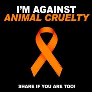 Im against animal cruelty