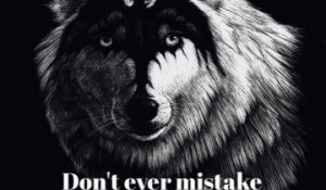 Related Pictures wise wolf quote life lostpeace