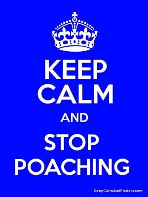 KEEP CALM AND STOP POACHING Poster