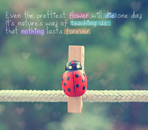 cute, flower, forever, ladybird, quotes, text